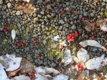 Pierres, feuilles tombées, et baies de sorbe Photos stock