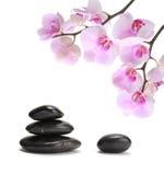 Pierres noires et orchidée rose Image libre de droits