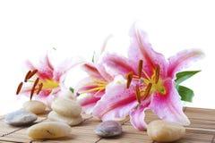 Pierres roses de lis et de thérapie Image stock