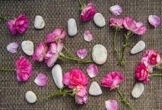 Pierres roses de mer de rose et de station thermale sur le fond rustique image stock