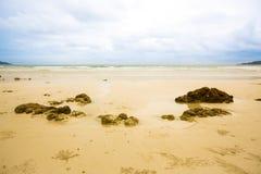 Pierres rugueuses sur le sable Phénomène de marée de mer mer sale d'algue et de plancton image pour l'espace de fond, de papier p photos libres de droits