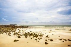 Pierres rugueuses sur le sable Phénomène de marée de mer mer sale d'algue et de plancton image pour l'espace de fond, de papier p photos stock