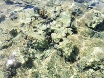 Pierres sous l'eau Photo libre de droits