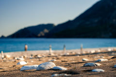Pierres sur le plan rapproché de plage de sable Images libres de droits