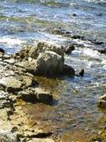 Pierres sur le rivage Images stock