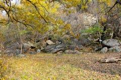 Pierres sur le verger dans la forêt d'automne images stock