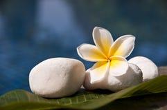 Pierres tropicales de blanc de fleur et de zen de frangipani de Plumeria Images stock
