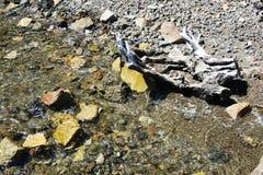 Pierres, vagues transparentes, minerais de l'eau, fond abstrait Image stock