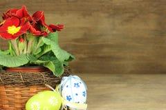 Pierwiosnek z Easter jajkami Obraz Royalty Free