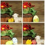 Pierwiosnek z Easter jajkami Obrazy Stock