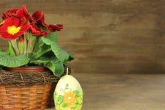 Pierwiosnek z Easter jajkiem Obrazy Royalty Free