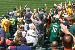 Pierwsza Liga Baseballa - Oakland Jak fan Rozweselać Zdjęcie Royalty Free