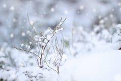 pierwsze wrażenie śnieg obrazy stock