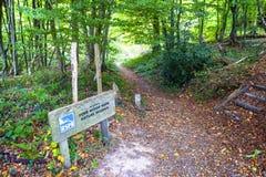 Pierwszego planu Drewniany rezerwat przyrody, Crowhurst, Wschodni Sussex, Anglia fotografia stock