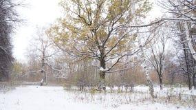 pierwszy śnieg zdjęcie royalty free
