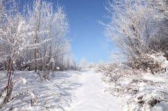pierwszy śnieg Obrazy Stock