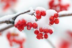 pierwszy śnieg Zdjęcia Stock