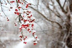 pierwszy śnieg zdjęcia royalty free