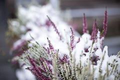 Pierwszy śnieg, podróż, Helsinki, szczegóły/ Zdjęcia Stock