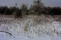 Pierwszy śnieg spadał Obraz Stock