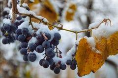 Pierwszy śnieg spadał wcześnie obraz royalty free