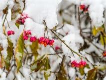 Pierwszy śnieg w wczesnej zimie obraz stock