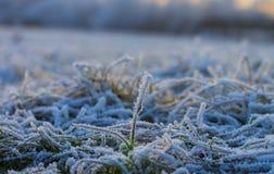 Pierwszy śnieg zakrywał trawy Zdjęcia Stock
