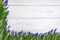 Pierwszy błękitne wiosny kwitną Muscari granicę na drewnianym stołowym tle Obraz Stock