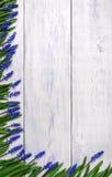 Pierwszy błękitne wiosny kwitną Muscari granicę na drewnianym stołowym tle Fotografia Stock