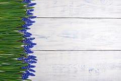 Pierwszy błękitne wiosny kwitną Muscari granicę na drewnianym stołowym tle Zdjęcia Royalty Free