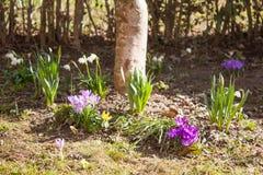 Pierwszy kwiaty wiosna Obrazy Stock