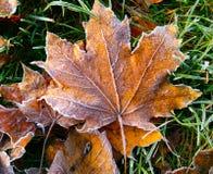 Pierwszy mróz na suchych liściach i zielonej trawie zdjęcia stock