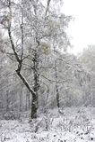pierwszy śnieg fotografia stock
