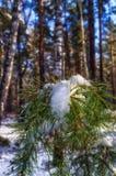 pierwszy śnieg Obraz Royalty Free