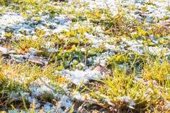 Pierwszy ?nieg na zielonej trawie spada? li?ciach w jesieni i Symbol nadchodz?ca zima E zdjęcia stock