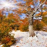 Pierwszy śnieg w lesie Obraz Royalty Free