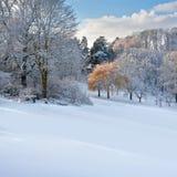 Pierwszy śnieg w parku. Zdjęcia Stock