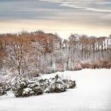 Pierwszy śnieg w parku. Zdjęcia Royalty Free