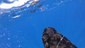 Pierwszy osoba widok nurek nurkował z wody zdjęcie wideo