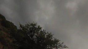 Pierwszy osoba widoku strusia jazda zdjęcie wideo