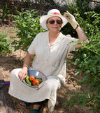 pierwszy pomidorów Zdjęcie Royalty Free
