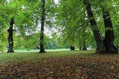 Pierwszy ranku światło w parku w Październiku Obraz Stock