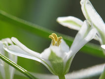 pierwszy sezon kwiatów zdjęcie stock