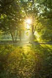 Pierwszy sunrays przy rankiem w Topcider parku, Belgrade zdjęcie stock