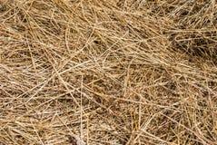 Pierwszy trawa, Niż siano obrazy stock
