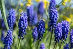 pierwszy wiosenny kwiat Zdjęcia Royalty Free