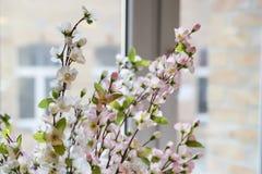 Pierwszy wiosna bielu róży kwiaty kwitnęli na windowsill Zdjęcia Royalty Free
