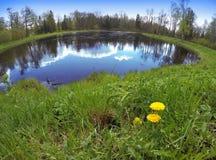 Pierwszy wiosna kwitnie dandelions na banku jezioro, obiektyw rybi oko Zdjęcie Stock