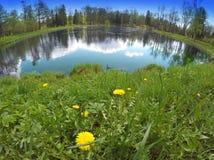 pierwszy wiosna kwitnie dandelions na banku jezioro, obiektyw rybi oko Obraz Royalty Free