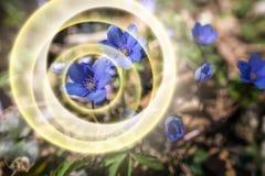 Pierwszy wiosna kwitnie tło fotografia royalty free